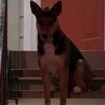 VIDEO: Verni pas čeka vlasnika koji se više nikad neće vratiti!