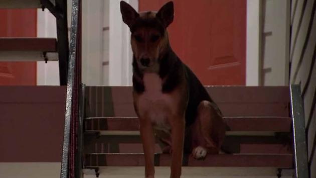 pas čeka vlasnika petface
