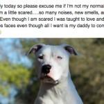 DIRLJIVO: Pismo ostavljenog psa koji traži novi dom!