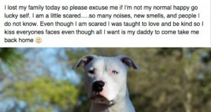 pismo ostavljenog psa petface