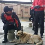 ZA SVAKU POHVALU: Ova dva policajca su spasila teško povređenog psa!