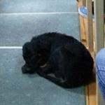 ZA SVAKU POHVALU: Na novosadskom fakultetu pustili psa sa ulice u amfiteatar da se ugreje!
