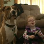 Devojčici (4) hoće da oduzmu psa terapeuta, jer su procenili da je opasan!