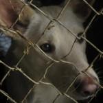 VRBAS: U ovom Prihvatištu pse ne ubijaju, a sproveli su i akciju – pas za mladi bračni par!