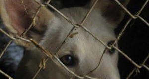 pse ne ubijaju petface
