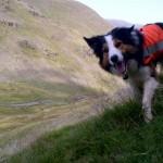 PSEĆA UPORNOST: Psi tragači najčešći izbor prilikom traganja za nestalima!