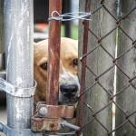 U ovom Prihvatilištu pucaju u pse – i to je sasvim legalno!
