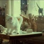 Ako se pitate šta vaša mačka radi sama kod kuće, ovaj VIDEO će vam odgovoriti!