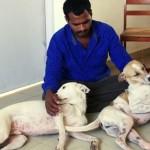 POSVEĆENOST BEZ GRANICA: Ovaj čovek je svoj život podredio spašavanju pasa sa ulice!