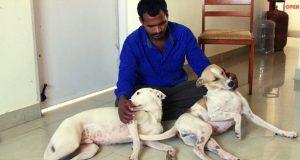 spašavanju pasa sa ulice petface