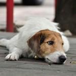 OBAVEZNO PROČITATI: Kroz OVAKVU patnju i bol prolaze trudne kuje na ulicama!