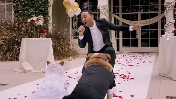 venčanje petface