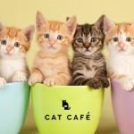 NAJBOLJI POSAO IKADA: Jedan kafić u Britaniji traži osobe za čuvanje mačaka!