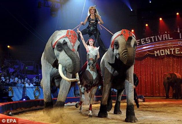 životinje u cirkusima petface