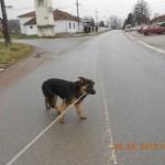DRAŽEVAC: Pas spašen sigurne smrti zahvaljujući devojčici Nataši od 12 godina!
