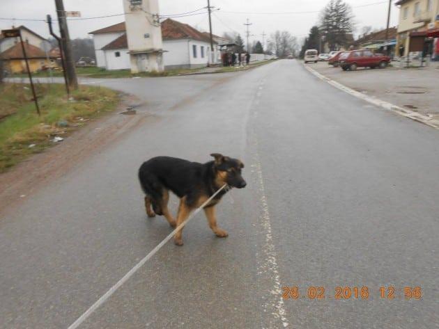 Pas spašen sigurne smrti petface
