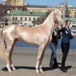 IMPRESIVNO: Ovo su najlepši konji na svetu! (FOTO)