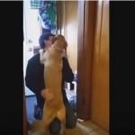 Ovako reaguje pas kada vidi vlasnika posle 2 meseca!(VIDEO)