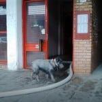 NOVI BEOGRAD: Majka i sin stradali u požaru, preživeo PAS, kome hitno treba dom!