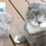 FOOLEE FURMINATOR: Specijalna četka za krzno ljubimaca smanjuje količinu dlaka u vašem stanu!