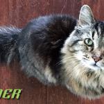 Natural Trainer brine i o zdravlju starih mačaka!