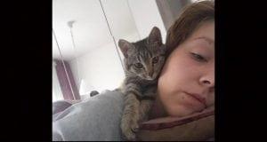 Napuštena maca petface
