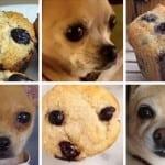 Pas ili hrana? Ovih 10 urnebesnih fotografija će vas naterati da se zapitate!