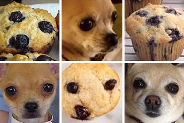 Pas ili hrana petface