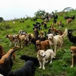Dobrodošli u privatno, volontersko sklonište za životinje – raj na Zemlji! (VIDEO)