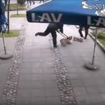 KRUŠEVAC: Osvanuo snimak nasilnog hvatanja napuštenih pasa!