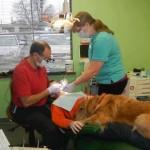 Stomatolog Vais dovodi svog psa Bruka u ordinaciju kako bi tešio pacijente!