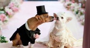 Svadba dva psa petface