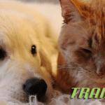 Kako je štene osvojilo srce jedne nezainteresovane mačke?