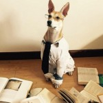 Ovaj udomljeni pas nova je zvezda Instagrama!