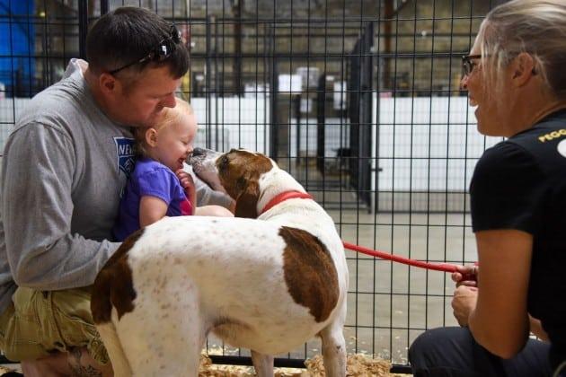 Udomljavanje pasa iz azila petface
