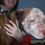 KAKAV ČOVEK: Ovaj mladić je zaustavio borbu pasa, kako bi spasao jednog od učesnika!
