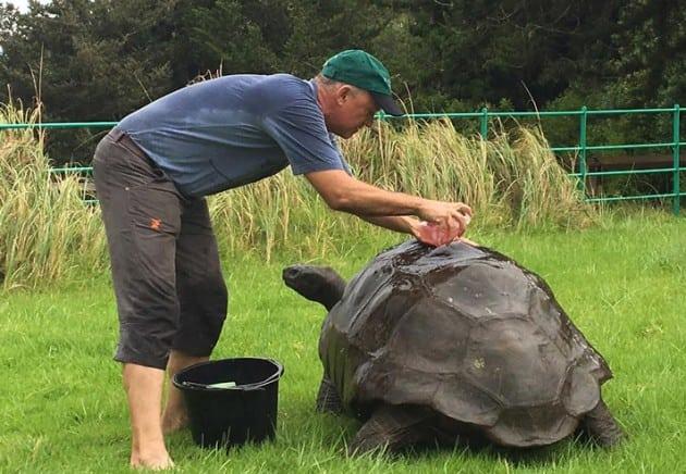 džinovska kornjača petface