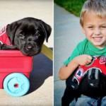 Ovaj pas je spasio svog malog štićenika – dečaka po imenu Luk!