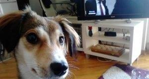 kesicu hrane za pse petface