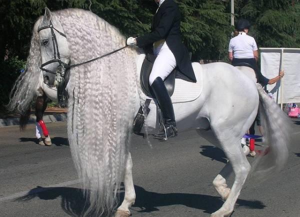 konji petface