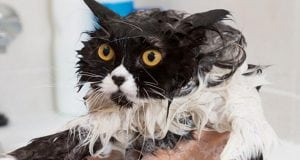 strah od kupanja petface