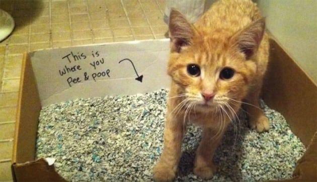 mačka na ivici smrti petface