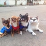 mačka vođa čopora petface1