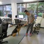 Zaposleni kojima je dozvoljeno dovoditi pse na posao jednoglasni – opušteniji smo i bolje radimo!