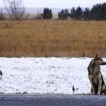Pas neće da se pomeri sa mesta na kojem je njegov vlasnik poginuo!