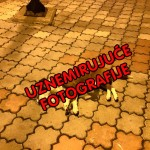 "PARAĆIN: ""Centar grada je preplavljen telima otrovanih pasa. Ovo nikad nisam video""!"