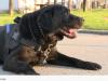 pas koji je pronašao rakete petface
