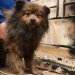 FILMSKA PRIČA: Ovaj pas je spasao devojčicu čiju je sobu zahvatio požar!