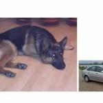 Ovaj penzioner nudi 500 KM i svoj automobil kao nagradu za izgubljenog psa!