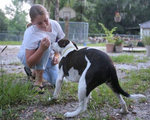 prihvatni centar za napuštene pse petface